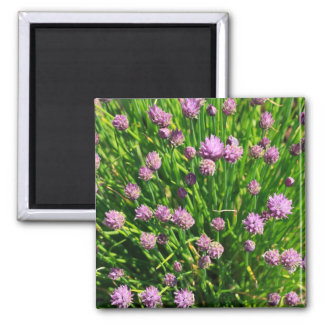 Salad Onion Blooming with Purple Blossoms Magnet