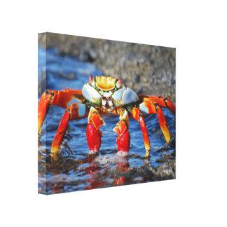 Sally Lightfoot Crab Canvas Art