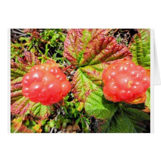 salmon berries card