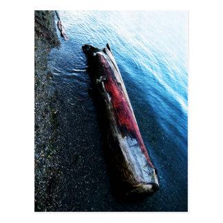 Salmon Colored Driftwood Postcard