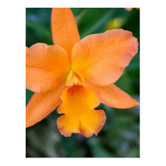 Salmon Orchid Postcard