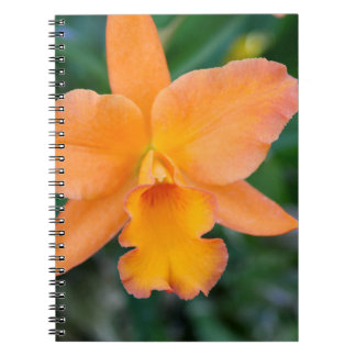 Salmon Orchid Spiral Note Book