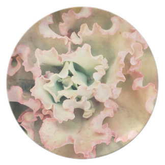 Salmon pink curly rose succulent plate