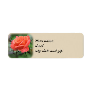 Salmon Rose in Garden Return Address Label