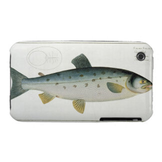 Salmon (Salmo Salar) plate XX from 'Ichthyologie, iPhone 3 Case