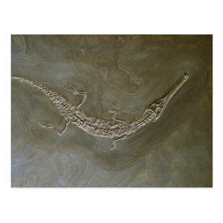 Saltwater crocodile Fossil Steneosaurus bollensis Postcard