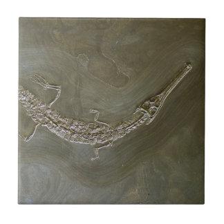 Saltwater crocodile Fossil Steneosaurus bollensis Small Square Tile