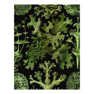 """Saltwater Plants""""Dessins sous Marin Plante"""" Full Color Flyer"""