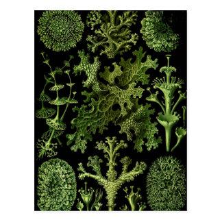"""Saltwater Plants""""Dessins sous Marin Plante"""" Postcards"""