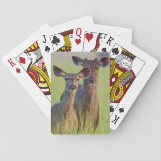 Sambar Deers in the meadows, Corbett National Park Playing Cards