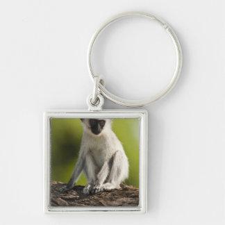 Samburu Game Reserve, Kenya, Vervet Monkey, Keychain