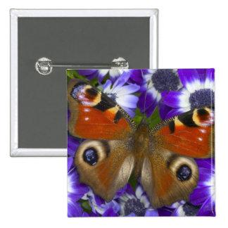 Sammamish Washington Photograph of Butterfly 10 15 Cm Square Badge
