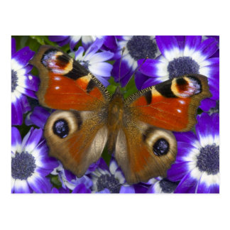 Sammamish Washington Photograph of Butterfly 10 Postcard