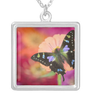 Sammamish Washington Photograph of Butterfly 11 Square Pendant Necklace