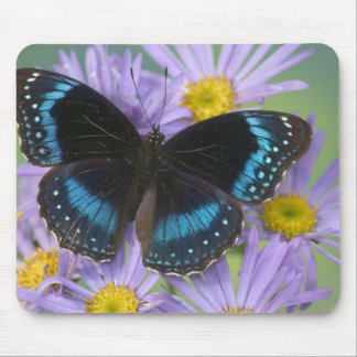 Sammamish Washington Photograph of Butterfly 14 Mouse Pad