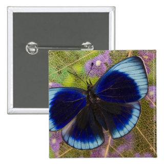 Sammamish Washington Photograph of Butterfly 15 Cm Square Badge