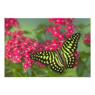 Sammamish Washington Photograph of Butterfly 16