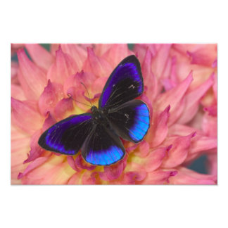 Sammamish Washington Photograph of Butterfly 17