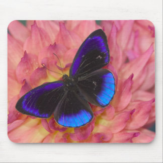 Sammamish Washington Photograph of Butterfly 18 Mouse Pad