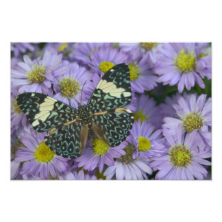 Sammamish Washington Photograph of Butterfly 18