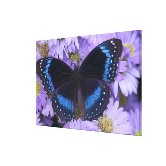 Sammamish Washington Photograph of Butterfly 19 Stretched Canvas Prints