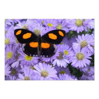 Sammamish Washington Photograph of Butterfly 20