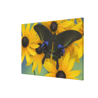 Sammamish Washington Photograph of Butterfly 22 Canvas Print