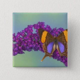 Sammamish Washington Photograph of Butterfly 27 15 Cm Square Badge