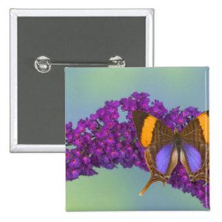 Sammamish Washington Photograph of Butterfly 27 15 Cm Square Badge