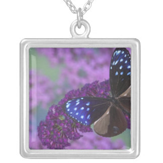 Sammamish Washington Photograph of Butterfly 30 Square Pendant Necklace