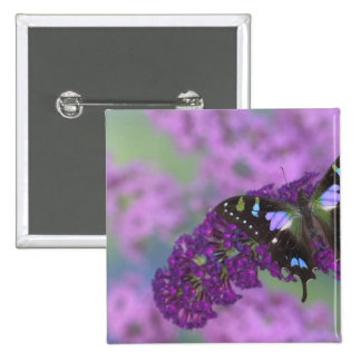 Sammamish Washington Photograph of Butterfly 32 15 Cm Square Badge