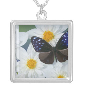 Sammamish Washington Photograph of Butterfly 33 Square Pendant Necklace