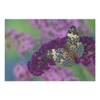 Sammamish Washington Photograph of Butterfly 34