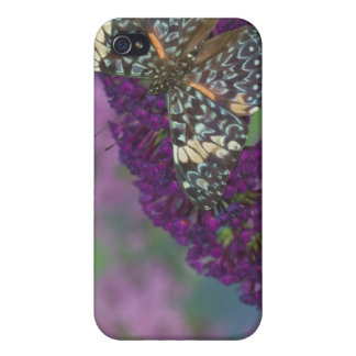 Sammamish Washington Photograph of Butterfly 35 iPhone 4/4S Cases