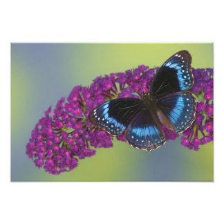 Sammamish Washington Photograph of Butterfly 37