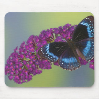Sammamish Washington Photograph of Butterfly 38 Mouse Pad