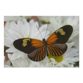 Sammamish Washington Photograph of Butterfly 38