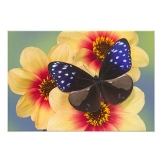 Sammamish Washington Photograph of Butterfly 39