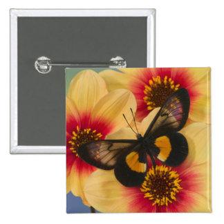 Sammamish Washington Photograph of Butterfly 39 15 Cm Square Badge