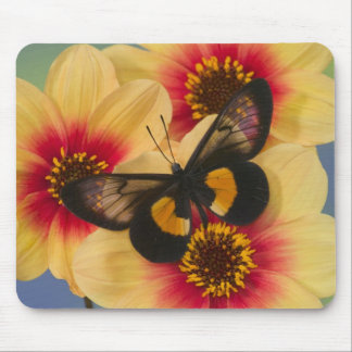 Sammamish Washington Photograph of Butterfly 39 Mouse Pad
