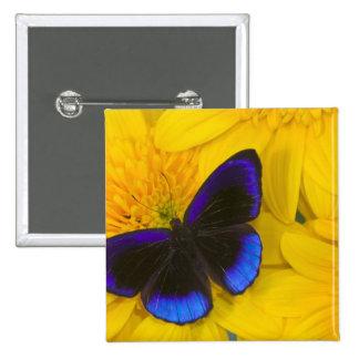 Sammamish Washington Photograph of Butterfly 41 15 Cm Square Badge