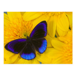 Sammamish Washington Photograph of Butterfly 41 Postcard