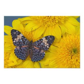 Sammamish Washington Photograph of Butterfly 42