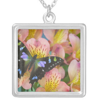 Sammamish Washington Photograph of Butterfly 47 Square Pendant Necklace