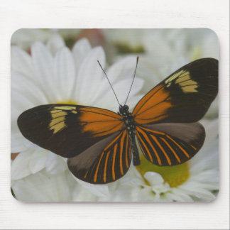 Sammamish Washington Photograph of Butterfly 50 Mouse Pad