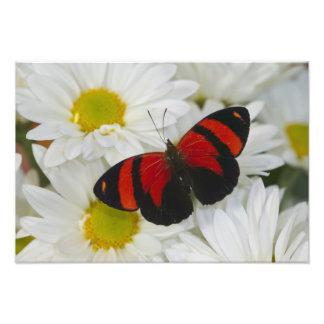 Sammamish Washington Photograph of Butterfly 50