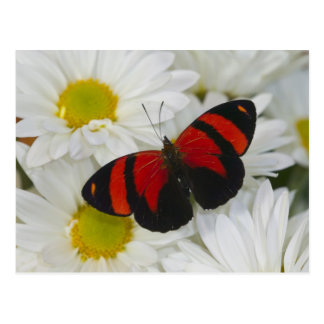 Sammamish Washington Photograph of Butterfly 51 Postcard