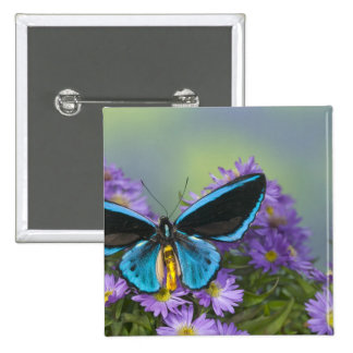 Sammamish Washington Photograph of Butterfly 52 15 Cm Square Badge