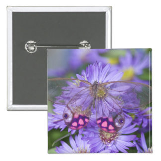 Sammamish Washington Photograph of Butterfly 53 15 Cm Square Badge