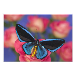 Sammamish Washington Photograph of Butterfly 54